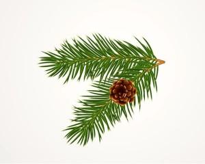 Pine Cone copy 2